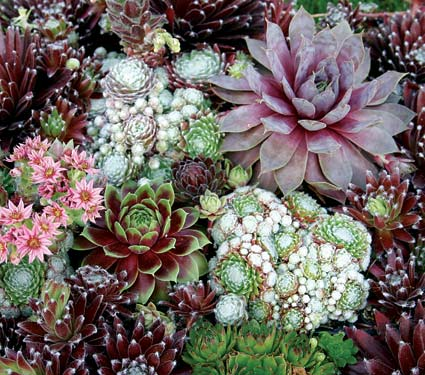 Disear jardin de 40 m2 fotos  Pgina 25