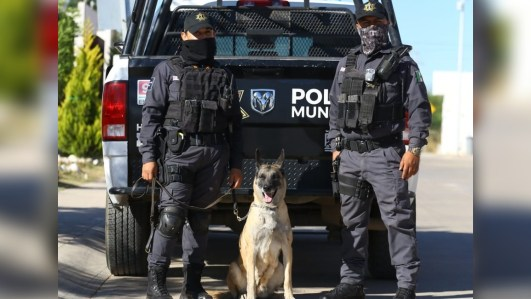 Ella tiene permiso de morder: Albina, la perra policía