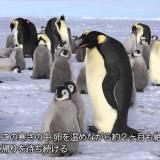 3d/emperorpenguinのサムネイル画像