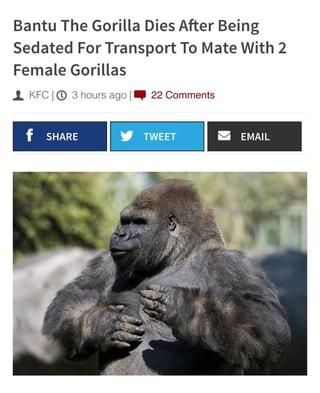 bantu the gorilla dies