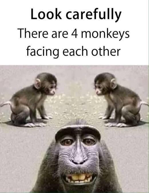 4 Monkeys Images : monkeys, images, Carefully, There, Monkeys, Facing, Other, IFunny
