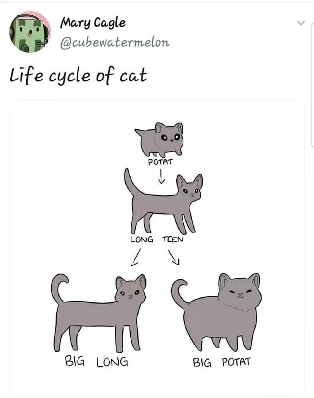 Potato Cat Meme : potato, Eagle, Cycle, IFunny