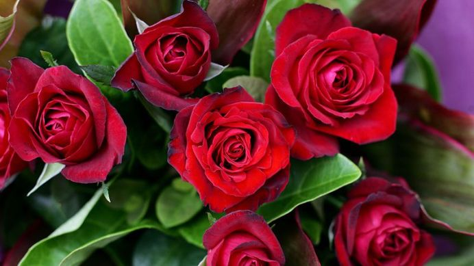 The experts say the more you spend on a bunch of flowers for Valentine's Day, the longer they should last (AAP).