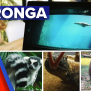 Zoo Experience Delivered To Your Screen 9news Latest News