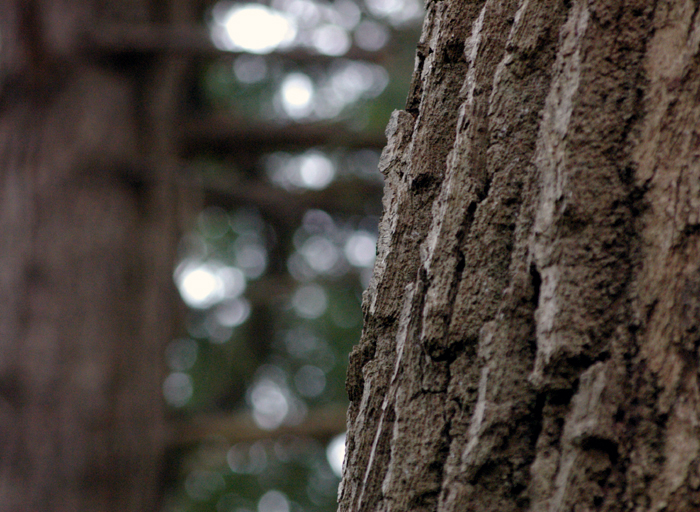 Oak Buddy