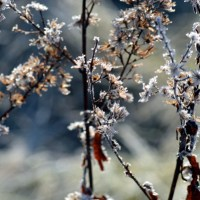 Winter Flowers in the Meadow