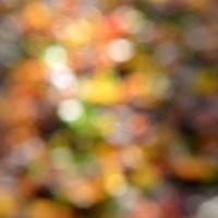 Fall Blur