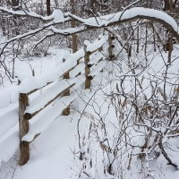 Snow Along the Fence