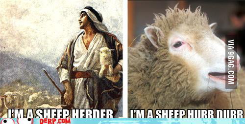Derpy Sheep hope its not a repost  9GAG