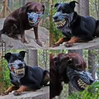 Werewolf dog muzzle for Halloween!