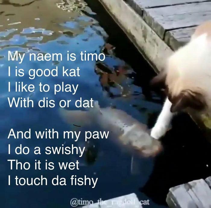 touch da fishy 9gag