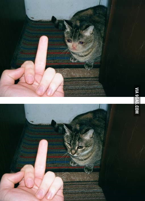 Crying Cat Middle Finger : crying, middle, finger, Middle, Finger, Fake!, Almost, Cried, About, Thank