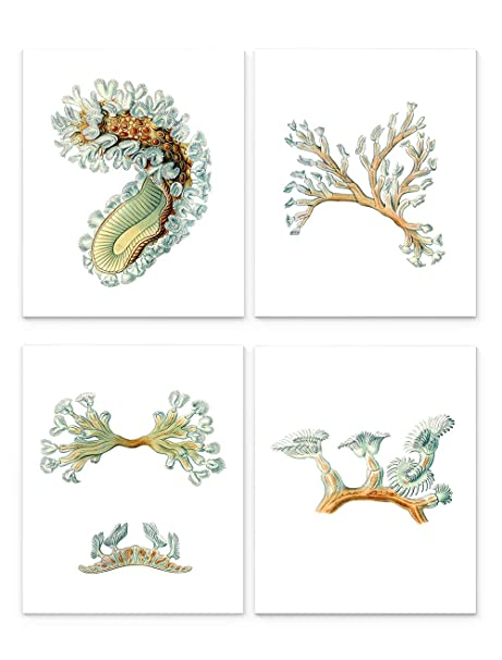 framed prints for kitchens kitchen island cabinets bryozoa 海洋生物壁画 20 32 厘米x 25 4 厘米4 件套 无框艺术印刷品 无框