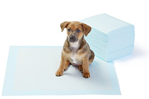 AmazonBasics - Tappetini igienici assorbenti per animali domestici, misura standard, 50 pz