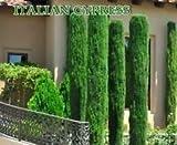SONIRY Germinación de Las Semillas: 300 Semillas Italianos (Cupressus sempervirens), Toscana, O Cementerio