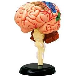 Puzle de 32 piezas que simula el cerebro humano