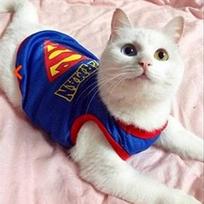 YMKWQF Ropa para Mascotas Funny Cat Clothes Sex Nurse Suit Clothing Costume For Cats Cool Christmas Halloween Costume Pet Clothes Suit For Cat