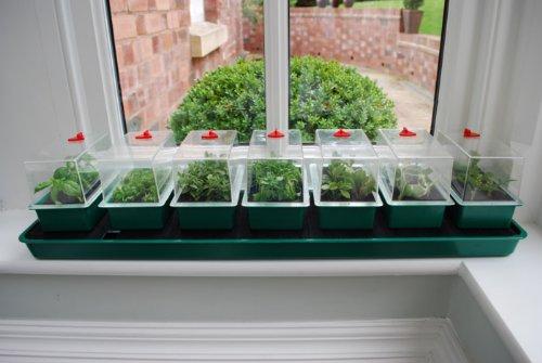 Garland GAL16SW Super 7 Self-Watering Windowsill Propagator - Green