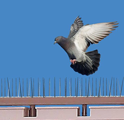 SpikeZone - Bird Control Spikes, Bird Spikes, Pigeon Spikes, Ploycarbote Spikes (Cover 22 Running Feet, Set Of 20 Pcs)