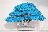 20pcs / semillas del árbol de arce azul bolsa de semillas de árboles bonsai bonsai. cielo azul japonés rara semilla de arce. plantas de balcón para el jardín de