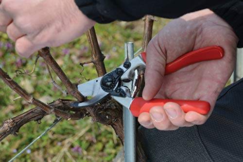 This secateurs are easy to use and won't fatigue your wrist whilst pruning roses due to an ergonomic design with an angled head plus cushion-shock absorber. With its rotating handle revolving on its own axis, your fingers will be able to move naturally, thus minimising blisters and hand fatigue that may be a problem after extended pruning periods. This innovative swivel action requires 30% less effort than conventional secateurs and provides great comfort on continuous pruning work.