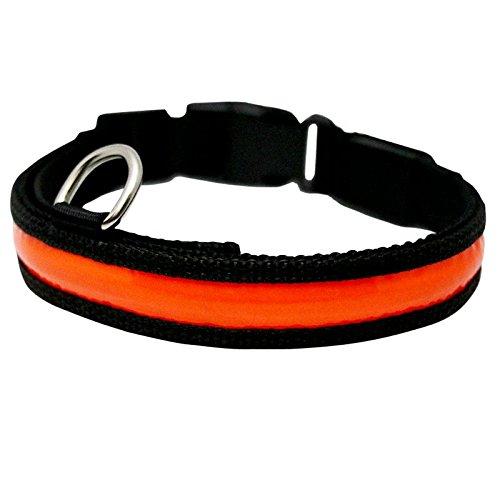 Dogz & Dudez USB Rechargeable LED Light Dog Collar (Neon Orange, Medium)