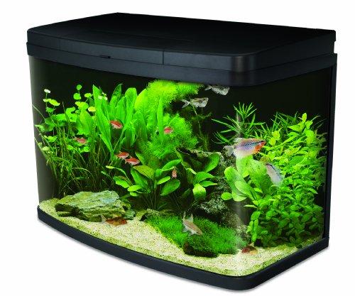 Interpet Insight acuario de cristal, set para principiantes completo Premium