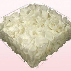 floristikvergleich.de 1l Liter Echte Rosenblätter weiß konserviert – Streukörbchen Hochzeit – Dekoration