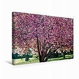 Premium Textil-Leinwand 45 cm x 30 cm quer Ein Motiv aus dem Kalender Bonn - Kirschblütenfest in der Altstadt | Wandbild, Bild auf Keilrahmen, Fertigbild auf echter Leinwand, Leinwanddruck