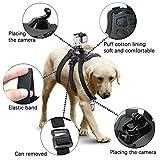 harnais micros2u pour chien Pet Chetch Fetch Strap Strap Belt Mount. Compatible avec GoPro Hero 7 6 5 4 3+ 3 2, Caméra d'action de session