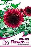 100 partículas de semillas de hierbas medicinales cártamo agua semillas de flores