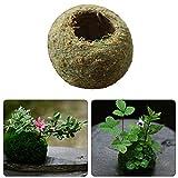 Naturel sec mousse Boule mousse bonsaï personnalisé Pot de fleurs Vert Sphaigne Substrat plantation Boule
