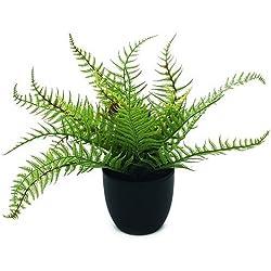 Euro Palms 82519942, Felce Boston Deluxe, 37 cm, Verde (Grün)