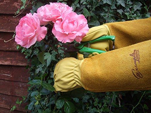 Rosen Gartenhandschuhe für Damen und Herren. Ziegenleder Gartenhandschuhe haben eine Lange Rindsleder Manschette zu Schützen für Ihre Arme, bis der Ellenbogen (Mittel, Gelb)