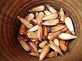 Portal Cool Paquete de semillas: Araucaria - Araucaria Araucana - 3 semillas viables