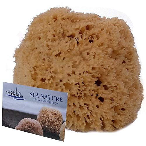 Éponge de mer naturelle de marque Sea Nature 5–6type en nid d'abeille pour nettoyer le corps et le visage, idéale pour le bain de bébé –solide et durable