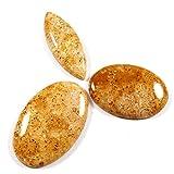 Gems&JewelsHub 100.10fossili corallo mix Nice naturale della pietra preziosa sciolto cabochon 3pz lotto all ingrosso