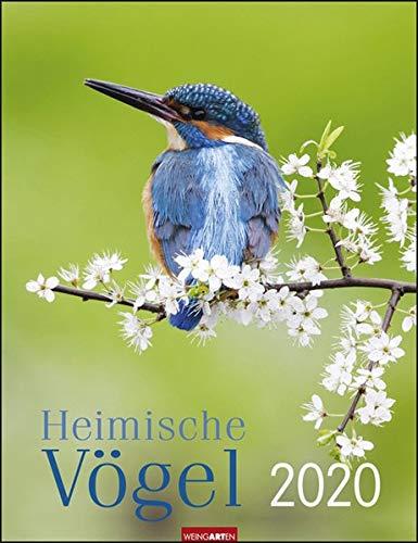 Heimische Vögel Kalender 2020