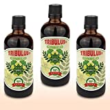 Cvetita Herbal, Tribulus terrestris et Ginkgo Biloba Sérum liquide, Prendre en charge la mémoire...