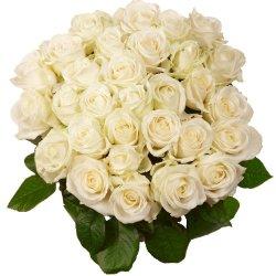 floristikvergleich.de Blumenversand – Blumenstrauß – zum Geburtstag – Premium Rosen in weiß – 10 Stück im Bund – Länge ca. 60cm – mit Gratis – Grußkarte zum Wunschtermin versenden