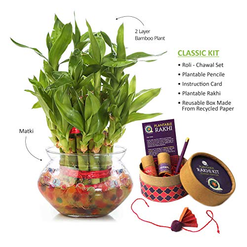 Nurturing Green Special Rakhi Combo - Lucky Bamboo Two Layer in Round Glass Pot & Classic Kit 1  Nurturing Green Special Rakhi Combo – Lucky Bamboo Two Layer in Round Glass Pot & Classic Kit 51SeZeELtCL