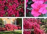10 colores Rododendro semillas en macetas semillas del árbol de la azalea biji, variedades completa 200 partículas / bolsa de la planta Bonsai Garden