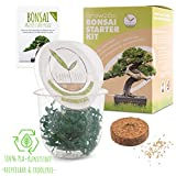 GROW2GO Bonsai Kit incl. eBook GRATUITO - Set con mini invernadero, semillas y tierra - idea de regalo sostenible para los amantes de las plantas (Pino Australiano)