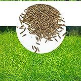 Zantec Semillas de plantas de acuario Decoración de hierba de agua acuática como Planta de primer plano de tanque de peces de jardín