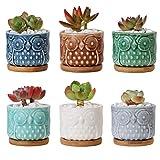 ComSaf Pot de Succulent avec Plateau Bambou 6.6cm Céramique Hibou Lot de 6, Cactus Plante Planteur Cache Pot Jardinière Contenant Décoration de Maison Bureau Cadeau pour Anniversaire Marige