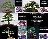 Portal Cool 50 semillas/Semillas Total: Mezclar la conífera Bonsai - Pinus Picea Larix Sylvestris Abies Semi Probado Guía +