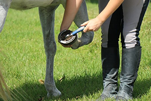 Oster - 78399-310 - Set de soins pour chevaux - 7 pièces - Bleu 28