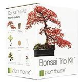 Plant Theatre - Kit de germinación bonsais