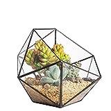 Artístico Terrario de Cactus Poliédrico Triangular de Cristal