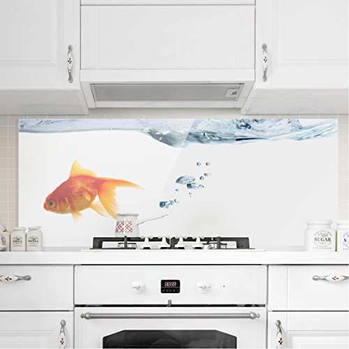 Bilderwelten paraschizzi in vetro goldfish panoramico paraschizzi cucina pannello - Pannelli paraschizzi per cucina ...